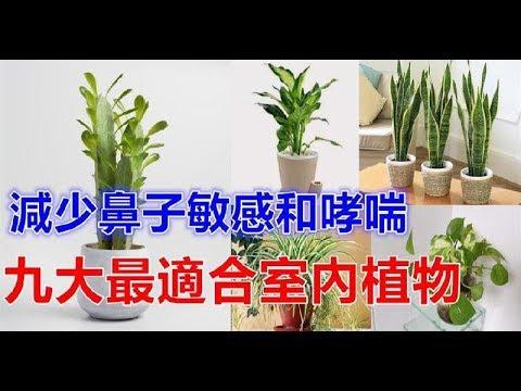 , title : '對肺部超好,這「9種室內植物」讓你鼻子過敏和哮喘不易復發,還能一覺到天亮