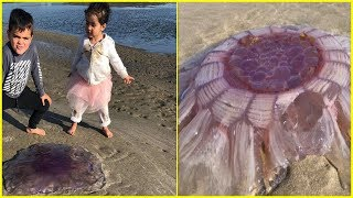 A Couple Saw This Pulsating Creature On The Beach And Knew They Had To Stop Their Kids Touching It
