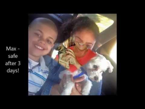 Missing Dogs Massachusetts