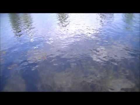 Ultralight Pond Fishing