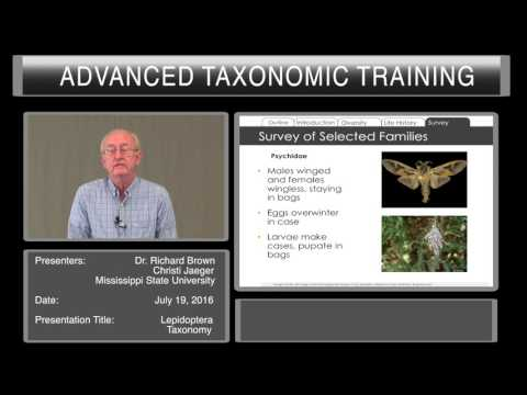 Introduction to Lepidoptera taxonomy