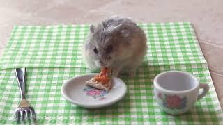 Хомяк, который любит пиццу
