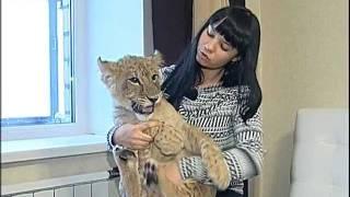 Лев в квартире