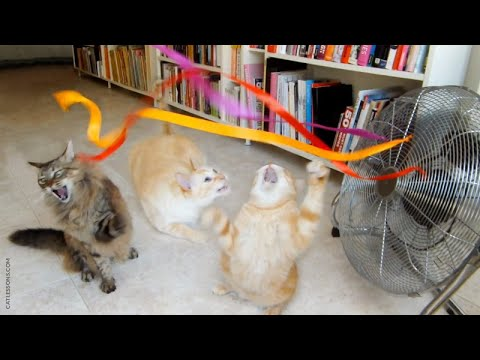 My 3 cats going absolutely nuts with fan ribbons.