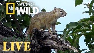 Safari Live - Day 131 | Nat Geo Wild