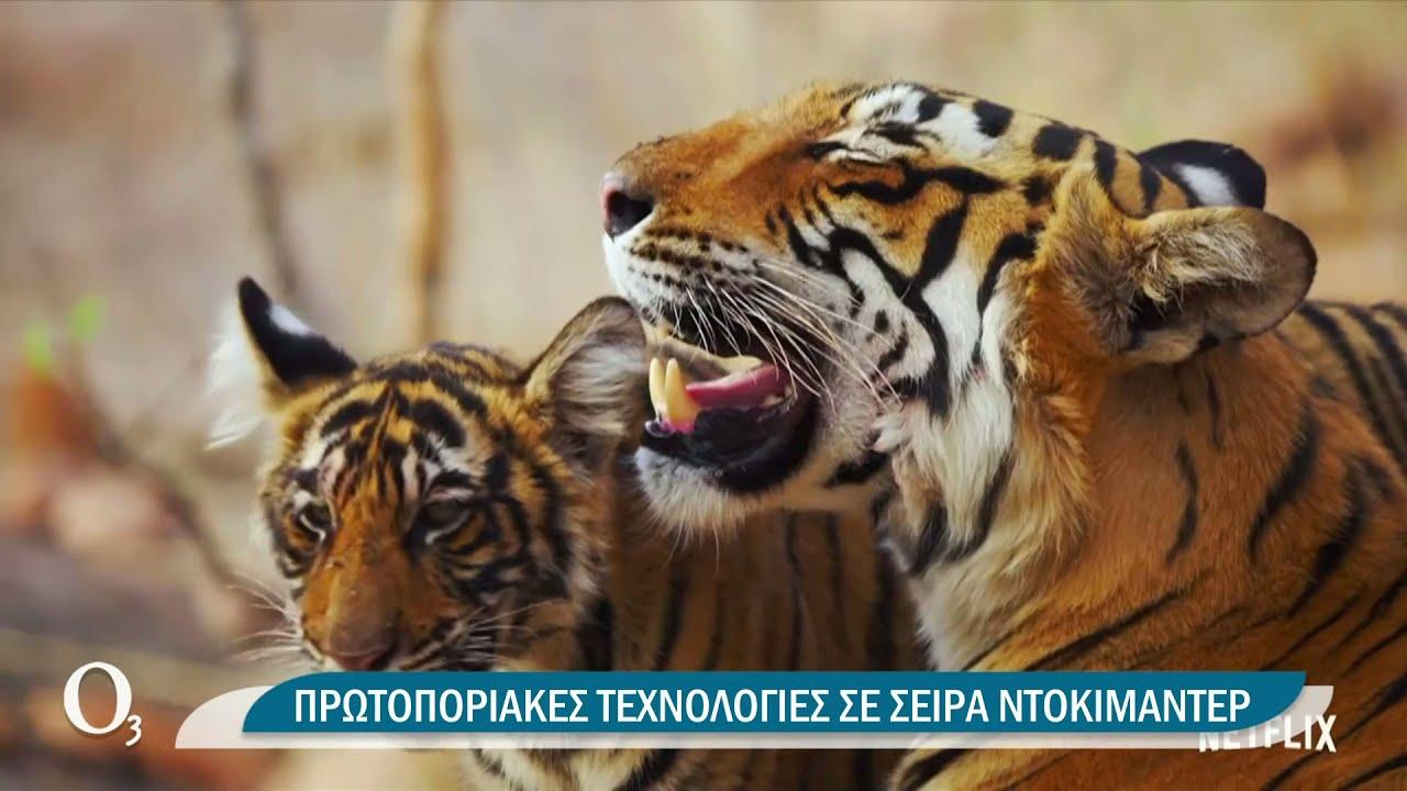 Η ζωή μέσα από τα μάτια των ζώων | 30/06/2021 | ΕΡΤ