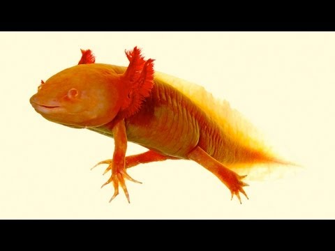 10 Real-Life Animal 'Superpowers'
