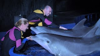 """""""What It's Like To Be A Dolphin Trainer"""" By Aquarium Love Stories"""