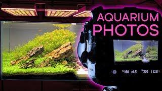 HOW TO: Photograph An Aquarium