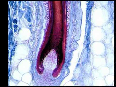 Masaje de la próstata del foro de próstata