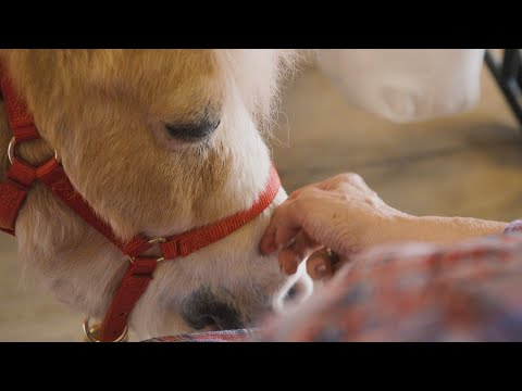 , title : 'A mini therapy horse named Big Daddy will win your heart