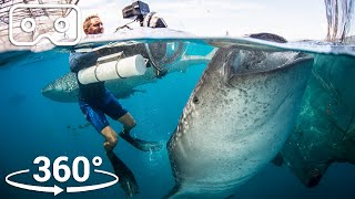 Swim With The Biggest Fish In The Ocean | VR 360 | Seven Worlds, One Planet