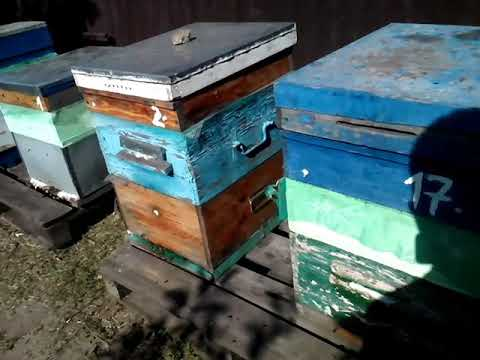 Пчелы дома, готовлю к зимовке 26 августа 2019