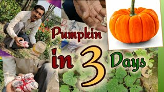 How to grow Pumpkin seeds  only in 3 days
