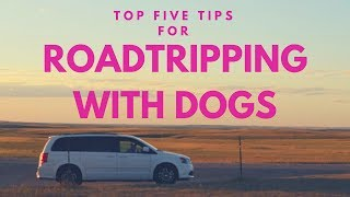Top 5 Tips for Road Tripping with your Dog