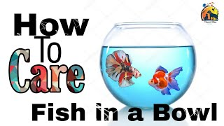How to care Betta fish in Bowl