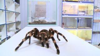 Нужно ли бояться волгоградских пауков?