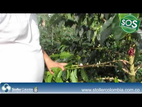 Stoller Colombia - Café