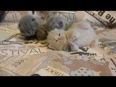 Народный способ выведения глистов у котов