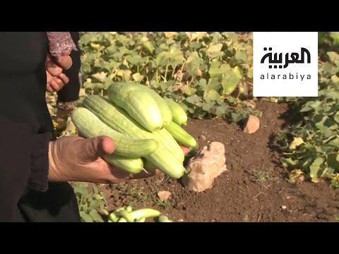 العرب اليوم - شاهد: نساء دير بلوط حارسات سهله الأخضر