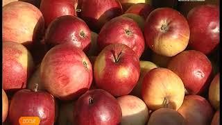 Православные отметят яблочный спас