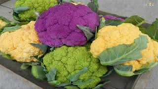 WOW! Amazing Agriculture Technology   Cauliflower