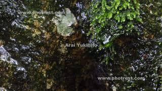 天城のブナの動画素材と4K写真素材