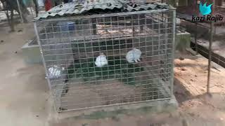 preview picture of video 'শ্রিমংগল চিড়িয়াখানা.  SRIMONGOL ZOO.  Srimongil chriakhana mowlobibazar Sylhet'