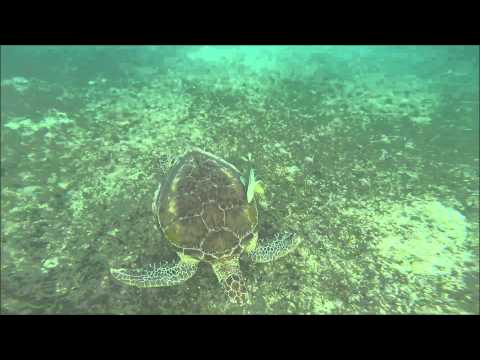 Schnorcheln mit Schildkröten in Akumal