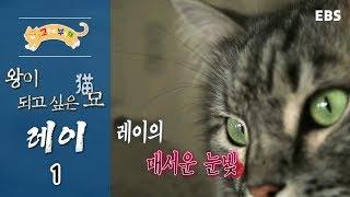 고양이를 부탁해 - 왕이 되고 싶은 묘(猫), 레이_#001