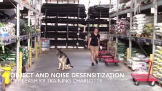 German Shepherd, Titus, after two weeks of training! Off Leash K9 Training Charlotte