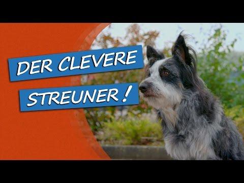 bosch | Fruitees - Der fruchtige Hundesnack: Werbespot #2