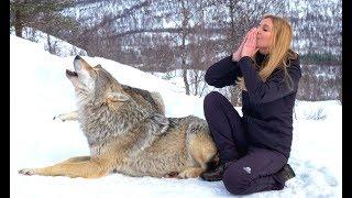 I HOWL WITH NORWEGIAN WOLVES - WOLF HOWL