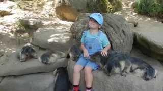 preview picture of video 'LE SUPER DOMPTEUR DE MARMOTTES AU PARC ANIMALIER D'ARGELES GAZOST'