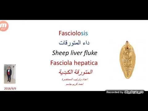 Gyógyszer a férgek megelőzésére az emberek számára