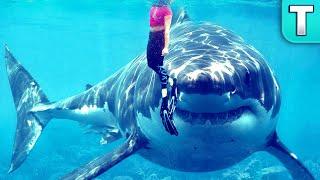 Great White Shark NO LONGER the APEX Predator of the Sea