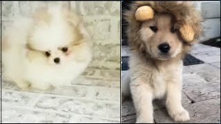 Cutest Animals! Cute Baby Dogs Compilation 2019 Amazing Puppies