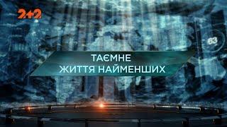 Таємне життя найменших  – Загублений світ. 2 сезон. 91 випуск