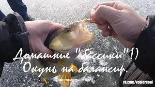 Ловля крупного окуня на балансир в ноябре. Зимняя рыбалка. Видео отчет от 26 ноября 2015.