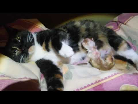 18,04,2020 Марусь родила котят