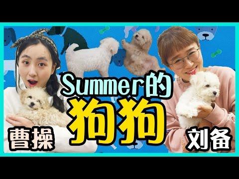 summer的狗狗曹操和劉備! | 小伶玩具 Xiaoling toys