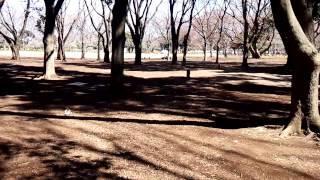 小金井公園のイメージ