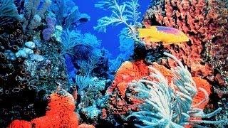 Медленные миры южных океанов и таежных морей