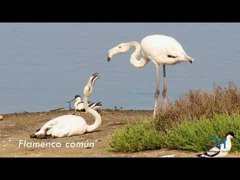 Aves de humedales de la provincia de Málaga
