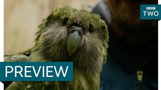 Download Youtube: Sirocco the flightless parrot and his human brother - New Zealand: Earth's Mythical Islands