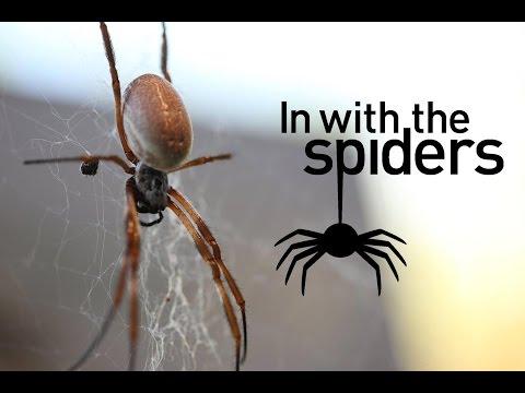 Spinnen in Londen Zoo