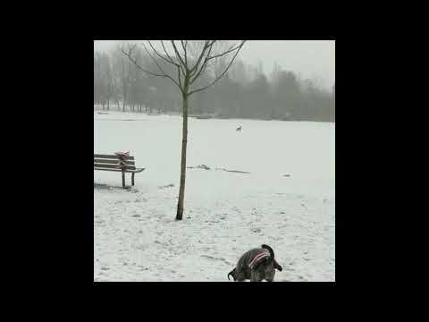 Отважная девушка спасла тонущую в ледяном озере собаку