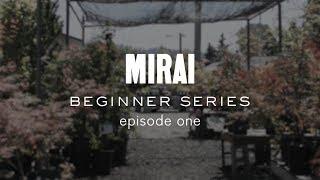 Bonsai Beginner Series - Material Selection