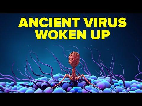 Paraziták és mióma kezelés