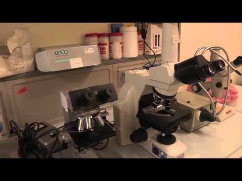 Comprare calze elastiche da varicosity in Penza
